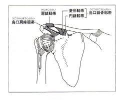 肩鎖関節1